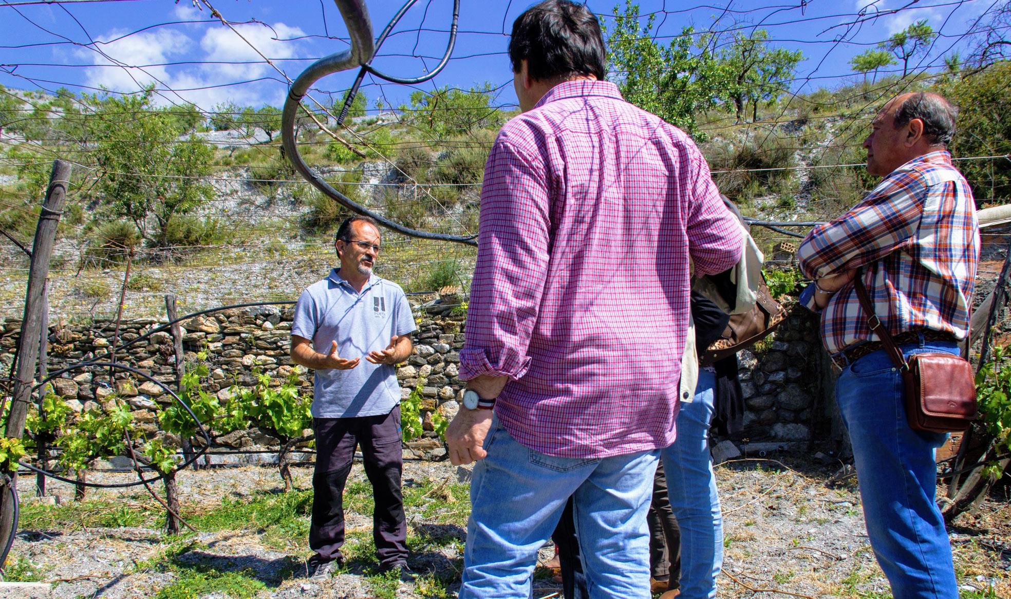 Visita a los viñedos